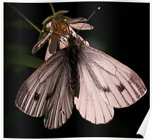 The Green Veined White Poster