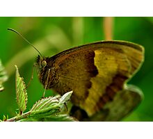 Meadow Brown Photographic Print