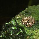 Frog by MaryMina