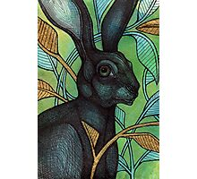 The Hidden Hare Photographic Print
