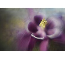 columbine1 Photographic Print
