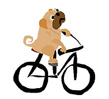 Funny Pug Dog Riding a Bicycle Photographic Print