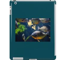 Red bellied piranha fishes iPad Case/Skin
