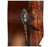 Dragonfly on Walking Stick Poster