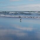 Seagull Seascape by quiquilee