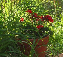 """""""Geranium In a Pot"""" by dfrahm"""