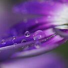 Purple Rain ~ by Edge-of-dreams