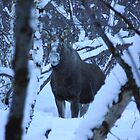 Elk through the trees by Honor Kyne