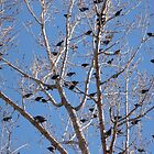 """Bird Tree"" by dfrahm"