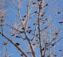 """""""Bird Tree"""" by dfrahm"""