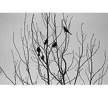 Fall Birds If you like, please purchase, try a cell phone cover thanks Photographic Print