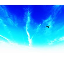 Bird In The Sky Photographic Print