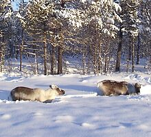 Reindeer Grazing by Honor Kyne