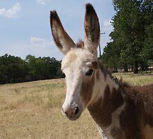 I'm All Ears by TxGimGim