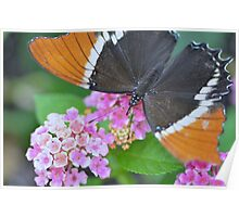 Brown and Black Butterfly on Lantana Flowers Poster