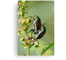 Love Bugs. Canvas Print