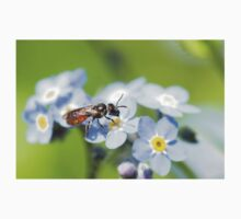 Halictidae Bee on Forget-Me-Nots One Piece - Short Sleeve