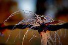Wireworks by Penny Kittel