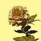 Friendship Rose by Rosalie Scanlon