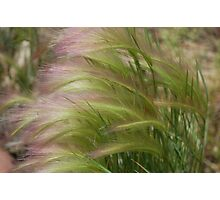 """""""Whispers in the wind"""" Photographic Print"""