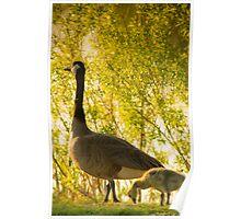 Goose & Gosling Poster