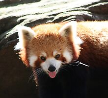 Red Panda Tongue by v-something