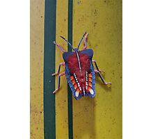 Edible stink bug on bamboo, Thailand Photographic Print