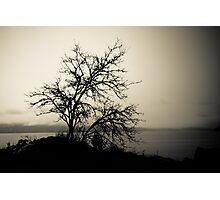 A dark view Photographic Print