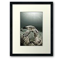 Reptile world, Hawks-bill turtle feeding Framed Print