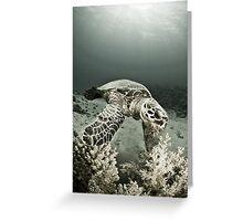 Reptile world, Hawks-bill turtle feeding Greeting Card