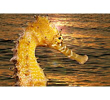 Sea Horse sun rise Photographic Print
