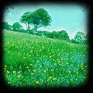 Buttercup meadow by sue mochrie