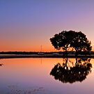 Bayside Beauty - Victoria Point Qld by Beth  Wode