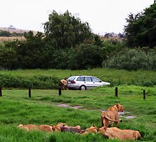 Chased Off By A Lion by Rodney Fagan
