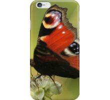 Peacock Butterfly iPhone Case/Skin