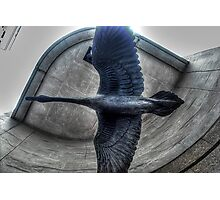 Taking off! Photographic Print
