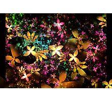 Apo Flowers Photographic Print