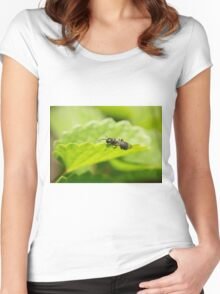 Hylaeus Bee on a leaf Women's Fitted Scoop T-Shirt