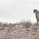 Kalahari Vista by JustineEB