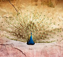 Peacock bird textured background by Arletta Cwalina