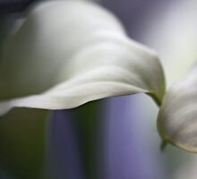 Calla-lous-ly Indifferent by Christine Huff