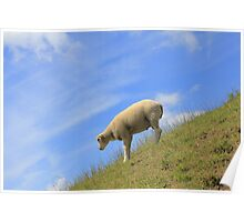 Dutch mountain sheep! Poster