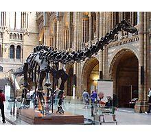Special Diplodocus Photographic Print