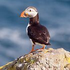 Puffin on cliff ~ Isle of May by Margaret S Sweeny