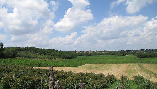 Wheat and Corn Fields by branko stanic