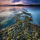 Dark Island by John Dewar