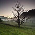 The Dead Tree by Brian Kerr