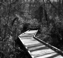 Lightened Path - Dismal Swamp State Park, NC by Denise Bulone