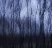 Abstract Spring Forest at Twilight by arocksphoto