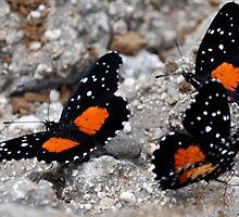 Butterflies - El Salvador by Jacquelyn Melling